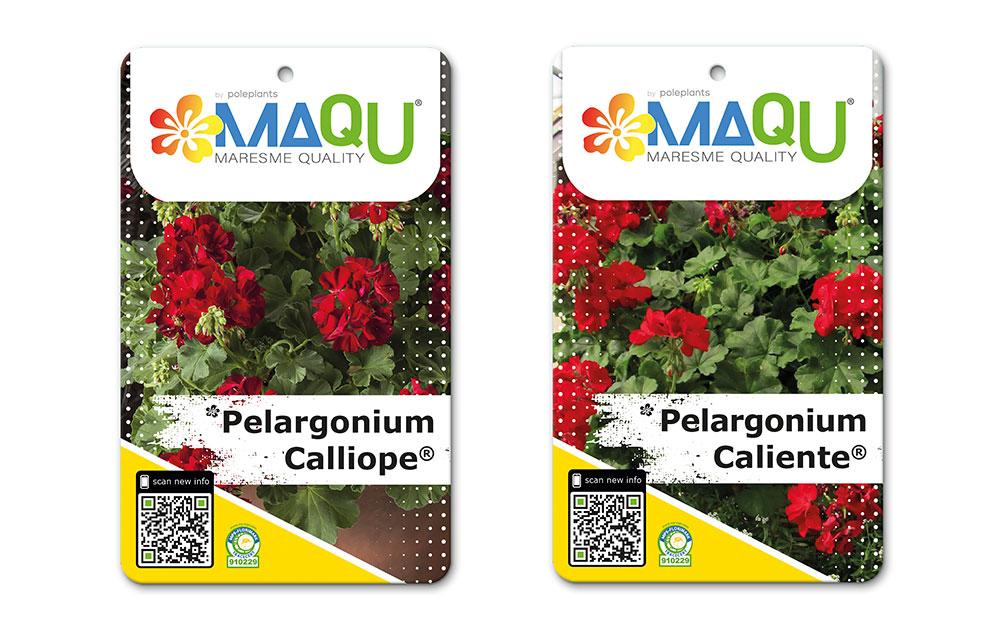 Pelargonium Calliope® y Pelargonium Caliente®