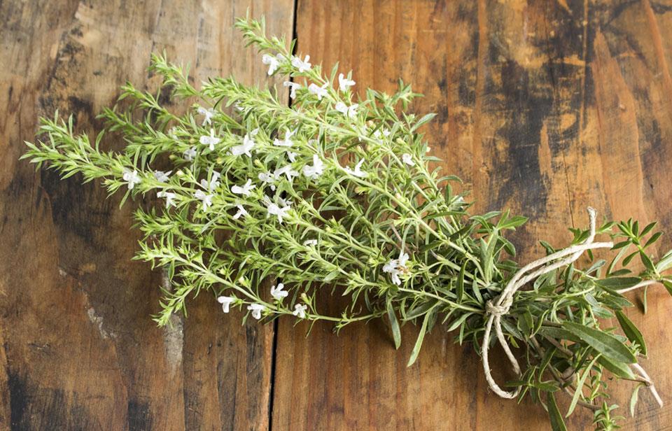 Secado de Satureja hortensis o Ajedrea